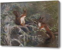 Картина Белки на деревьях