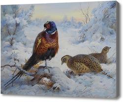 Картина Петух и курица Фазана зимой