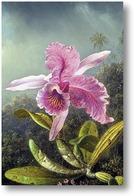 Купить картину Орхидея (часть картины)
