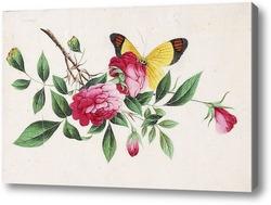 Картина Бабочка и пионы