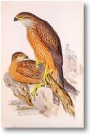 Картина Птицы Австралии