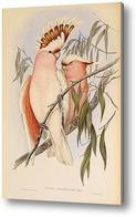 Купить картину Птицы Австралии