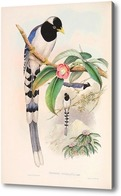 Картина Птицы Азии, Гульд Джон