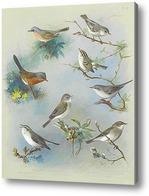 Картина Певчая птица и Крапивники