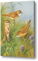 Картина Камышевки на болоте