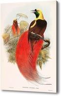 Купить картину Райские птицы