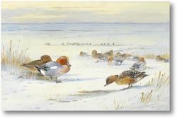 Картина Водоплавающие на снегу