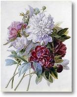 Купить картину Букет с красными, белыми и розовыми пионами