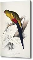 Картина Чернохвостый попугай, Лир Эдвард