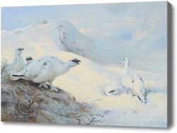 Картина Белая куропатка на снегу