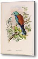 Картина Птицы Великобритании