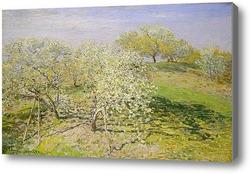 Купить картину Весна (цветение фруктовых деревьев)