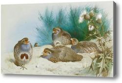 Картина Английская куропатка с можжевельником и чертополохом
