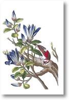 Картина Магнолия и красная птичка