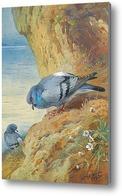 Картина Голуби на скалах